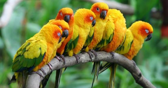 papagaios-animais-silvestres